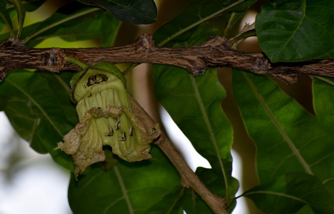 西瓜长在树上_图1-4