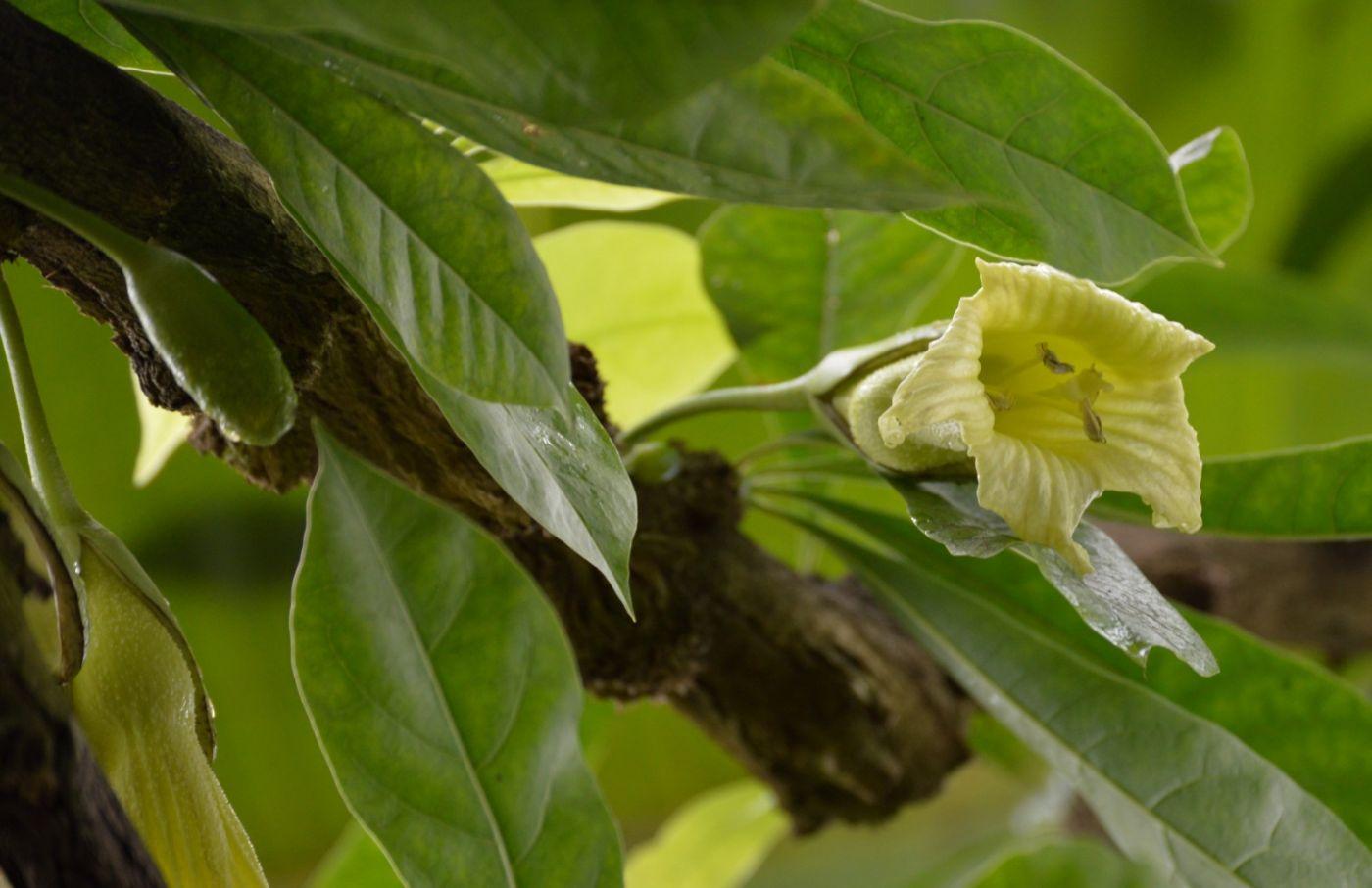 西瓜长在树上_图1-6