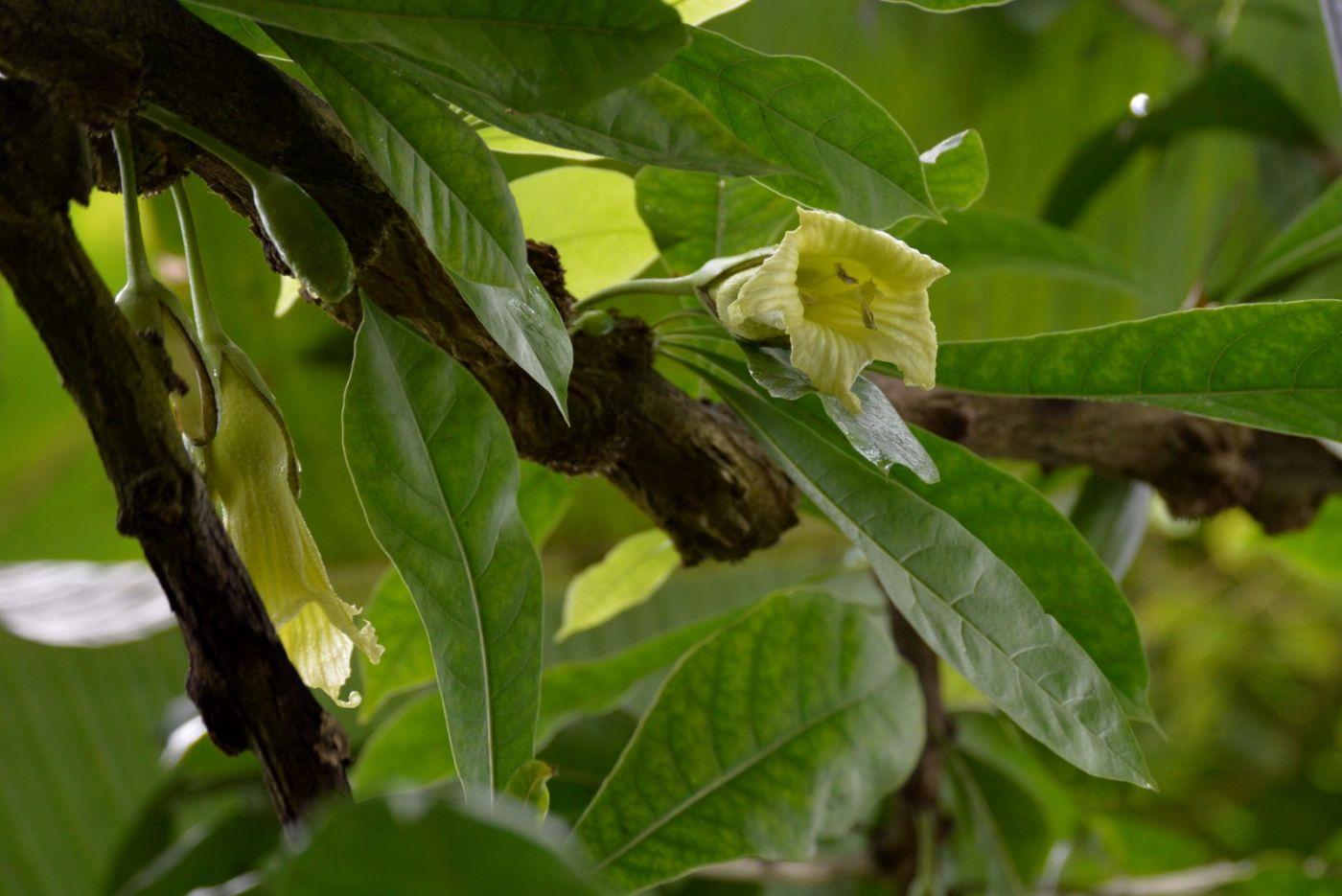 西瓜长在树上_图1-13