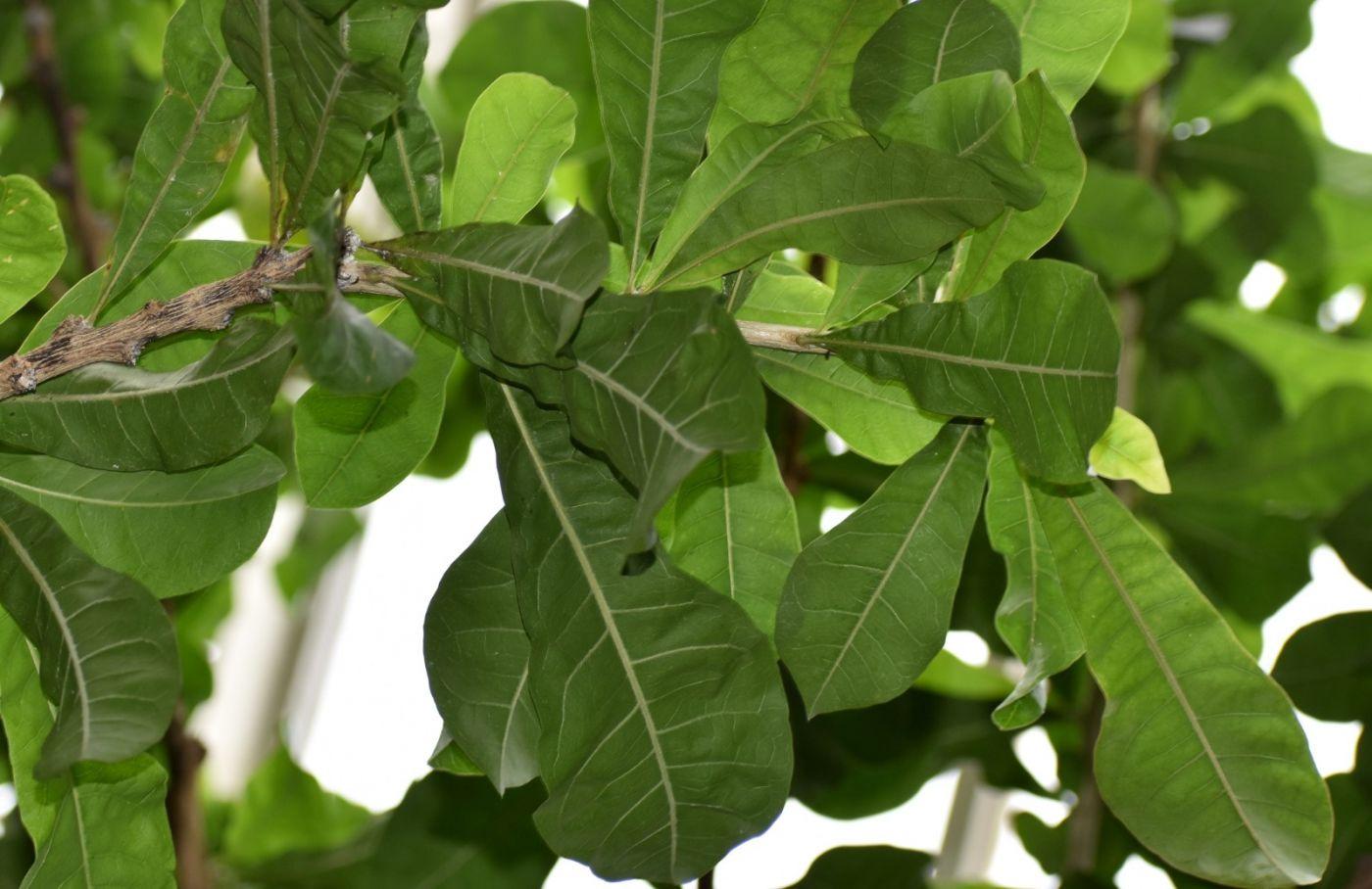 西瓜长在树上_图1-17