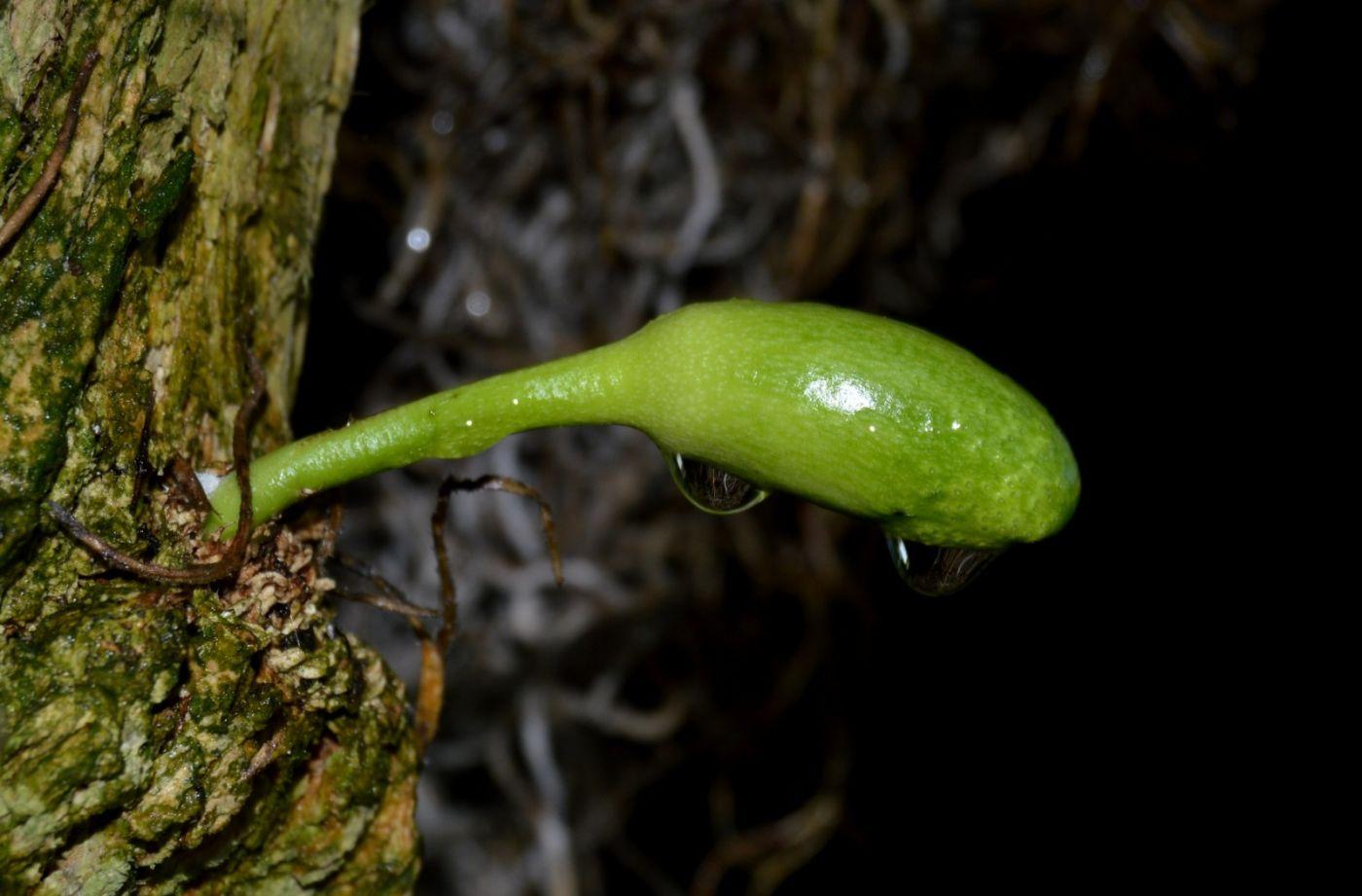 西瓜长在树上_图1-18