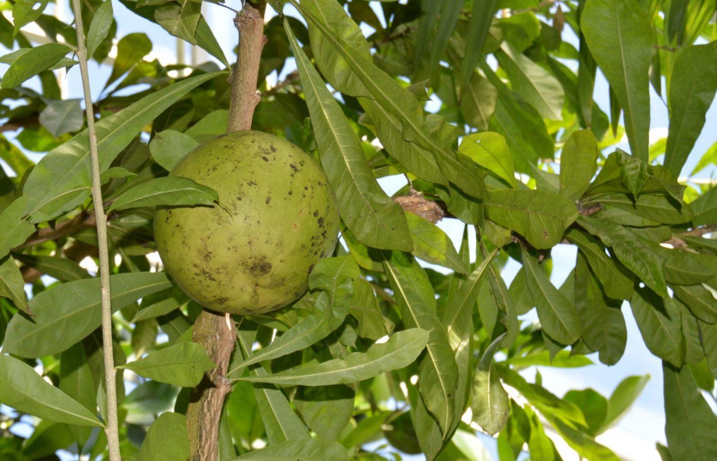 西瓜长在树上_图1-19