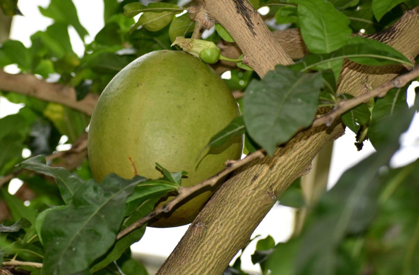 西瓜长在树上_图1-20