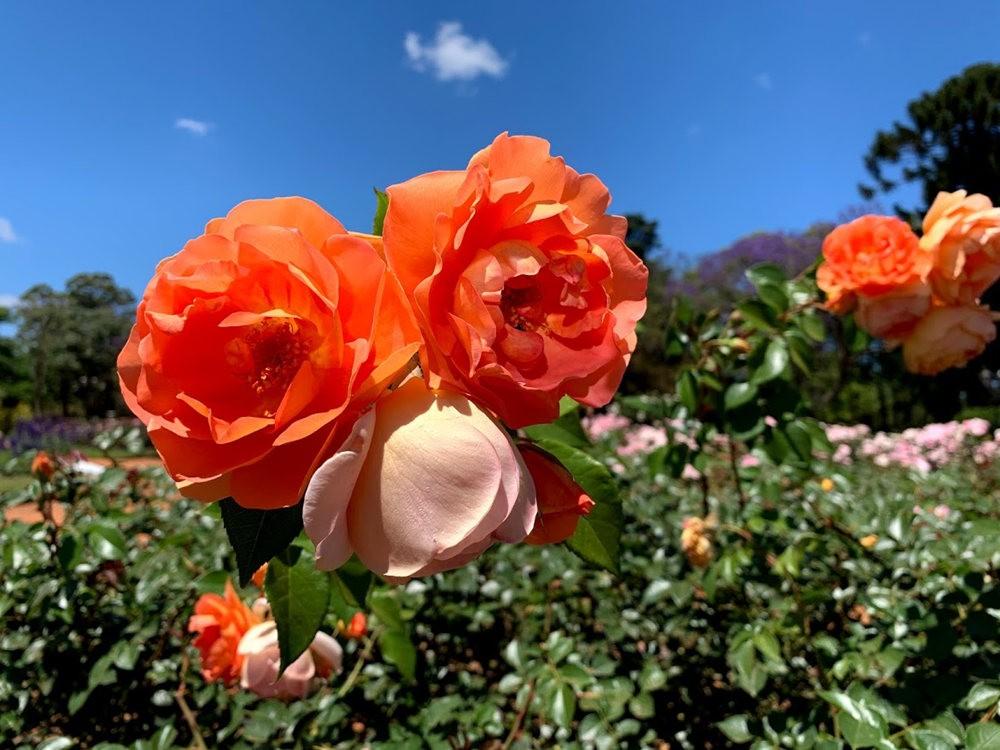布宜诺斯艾利斯植物园和日本花园_图1-1