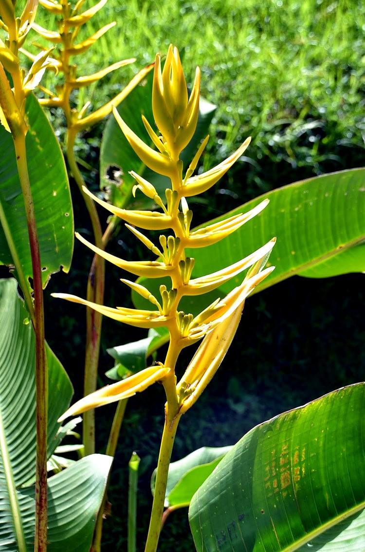 布宜诺斯艾利斯植物园和日本花园_图1-3