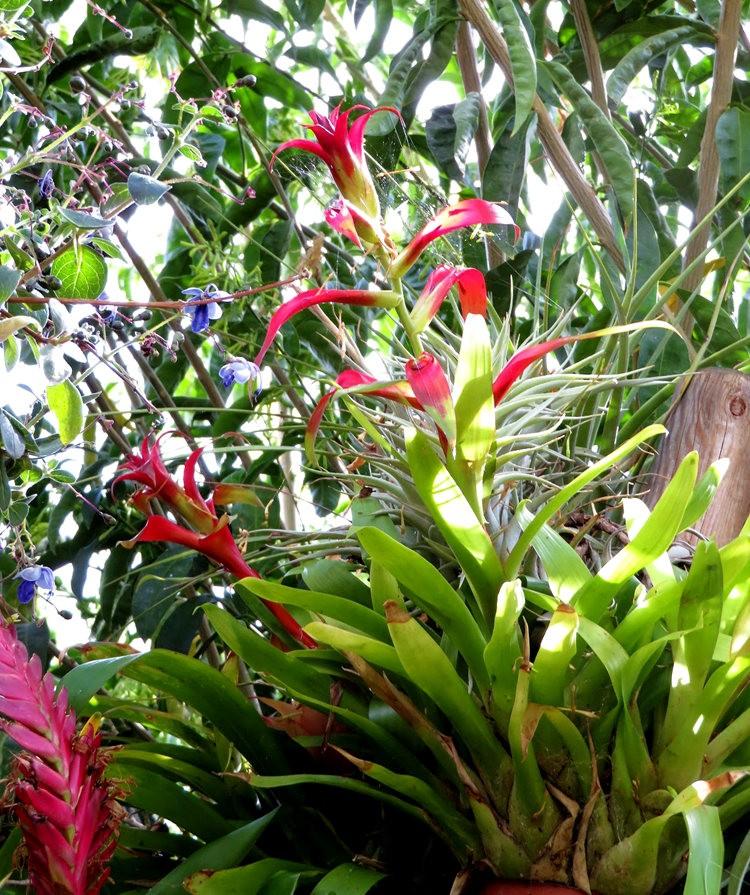 布宜诺斯艾利斯植物园和日本花园_图1-10