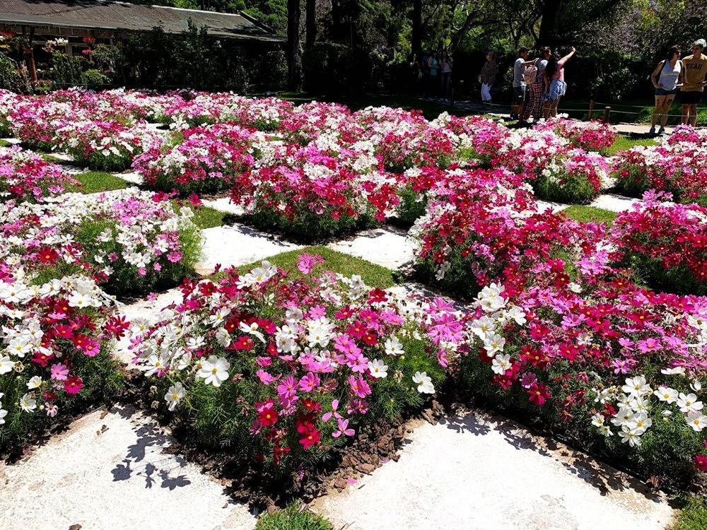 布宜诺斯艾利斯植物园和日本花园_图1-14