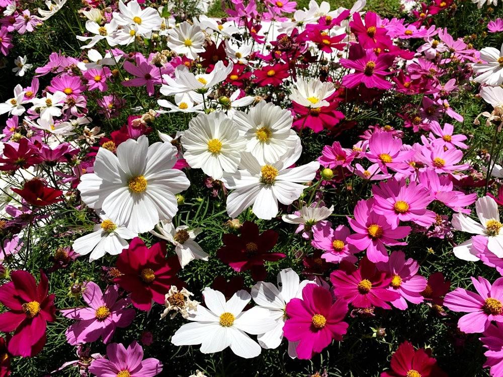 布宜诺斯艾利斯植物园和日本花园_图1-15