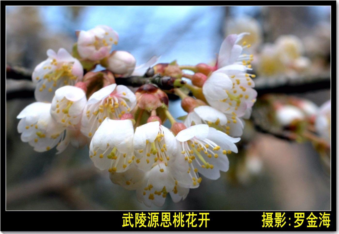 画堂春·春分日(诗词二首)_图1-1