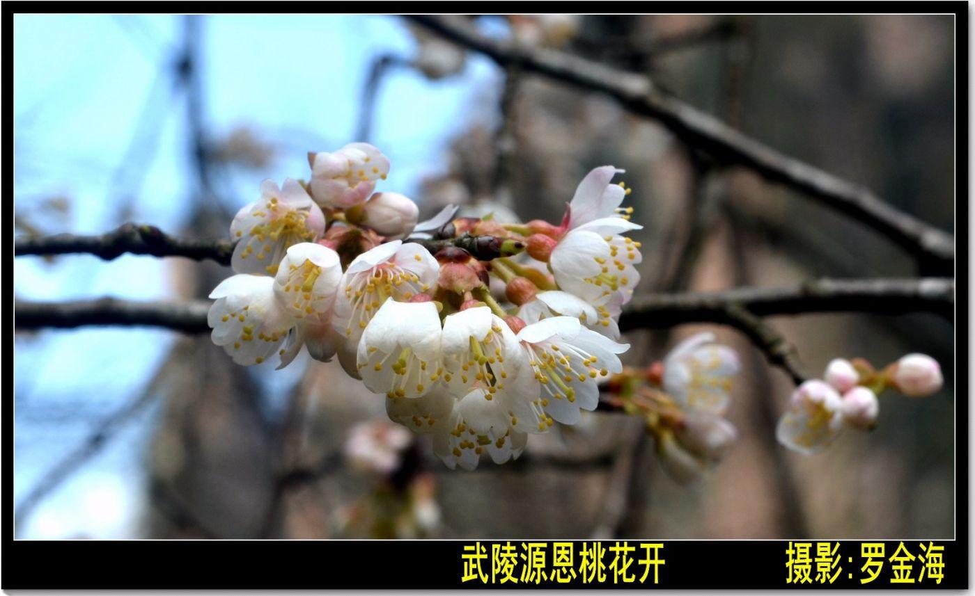 画堂春·春分日(诗词二首)_图1-3
