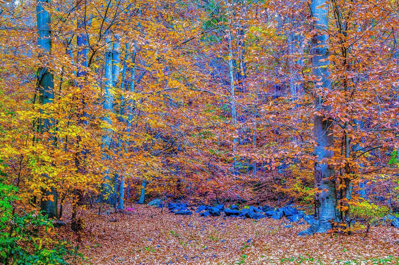 宾州雷德利克里克公园(Ridley creek park),如梦的画面_图1-9