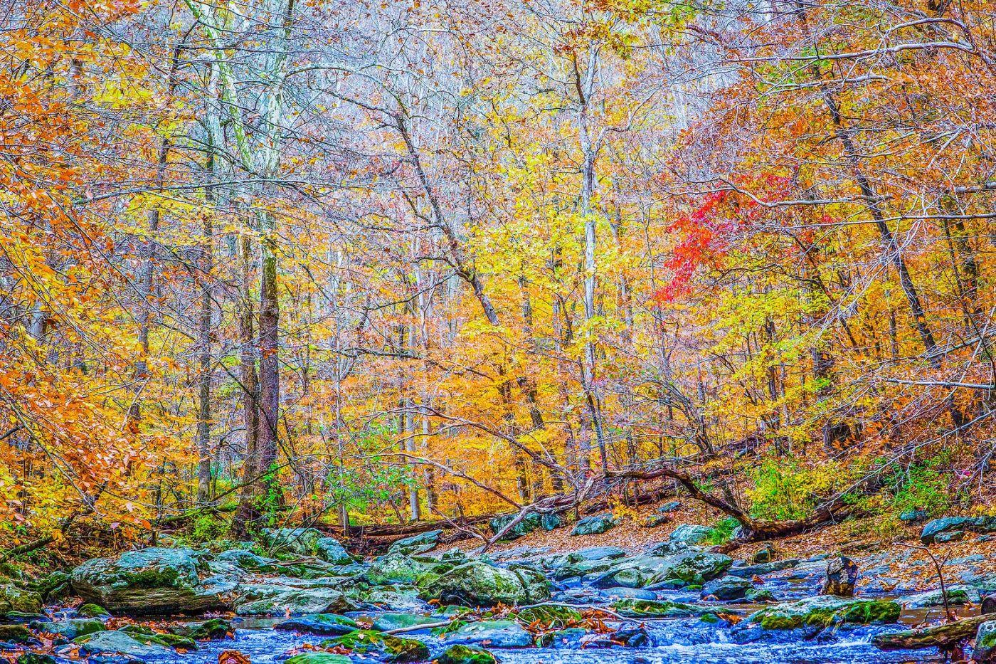 宾州雷德利克里克公园(Ridley creek park),如梦的画面_图1-3