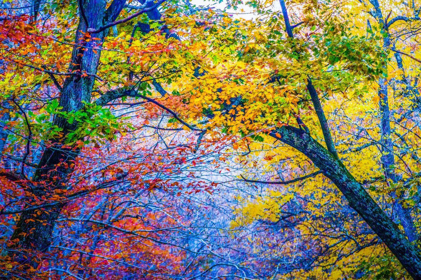 宾州雷德利克里克公园(Ridley creek park),如梦的画面_图1-1
