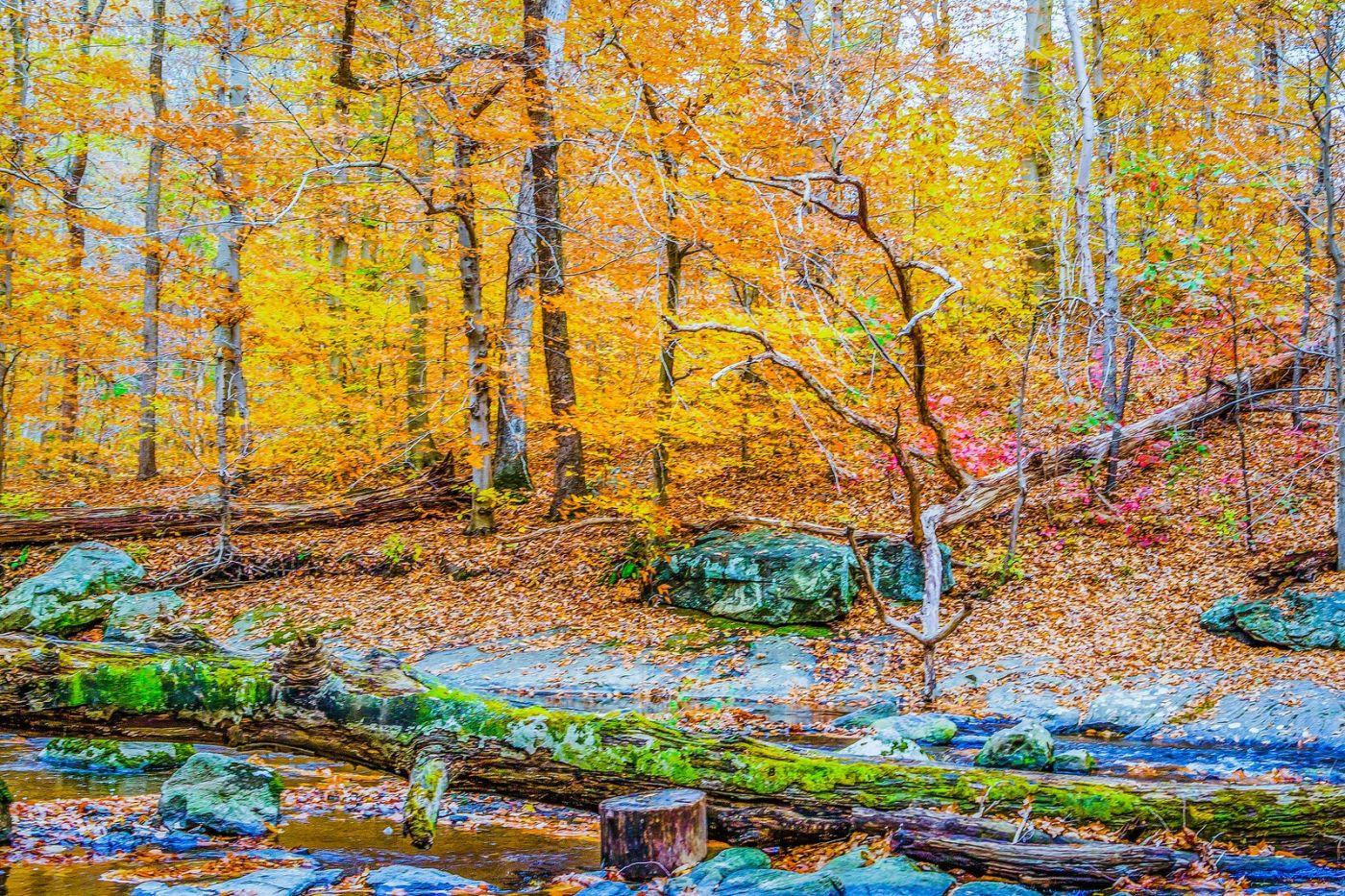 宾州雷德利克里克公园(Ridley creek park),如梦的画面_图1-2