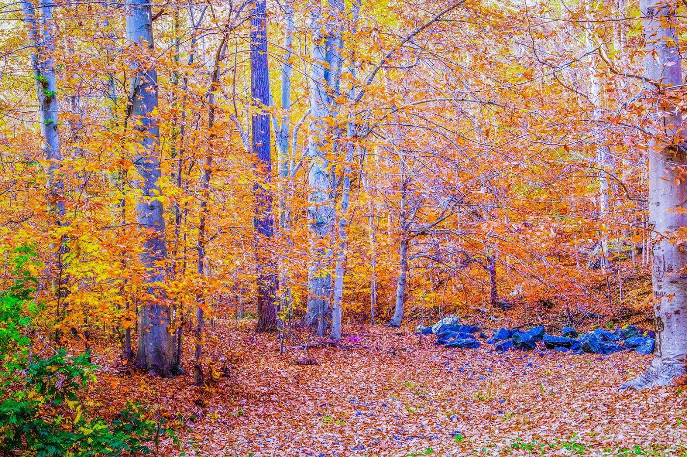 宾州雷德利克里克公园(Ridley creek park),如梦的画面_图1-13