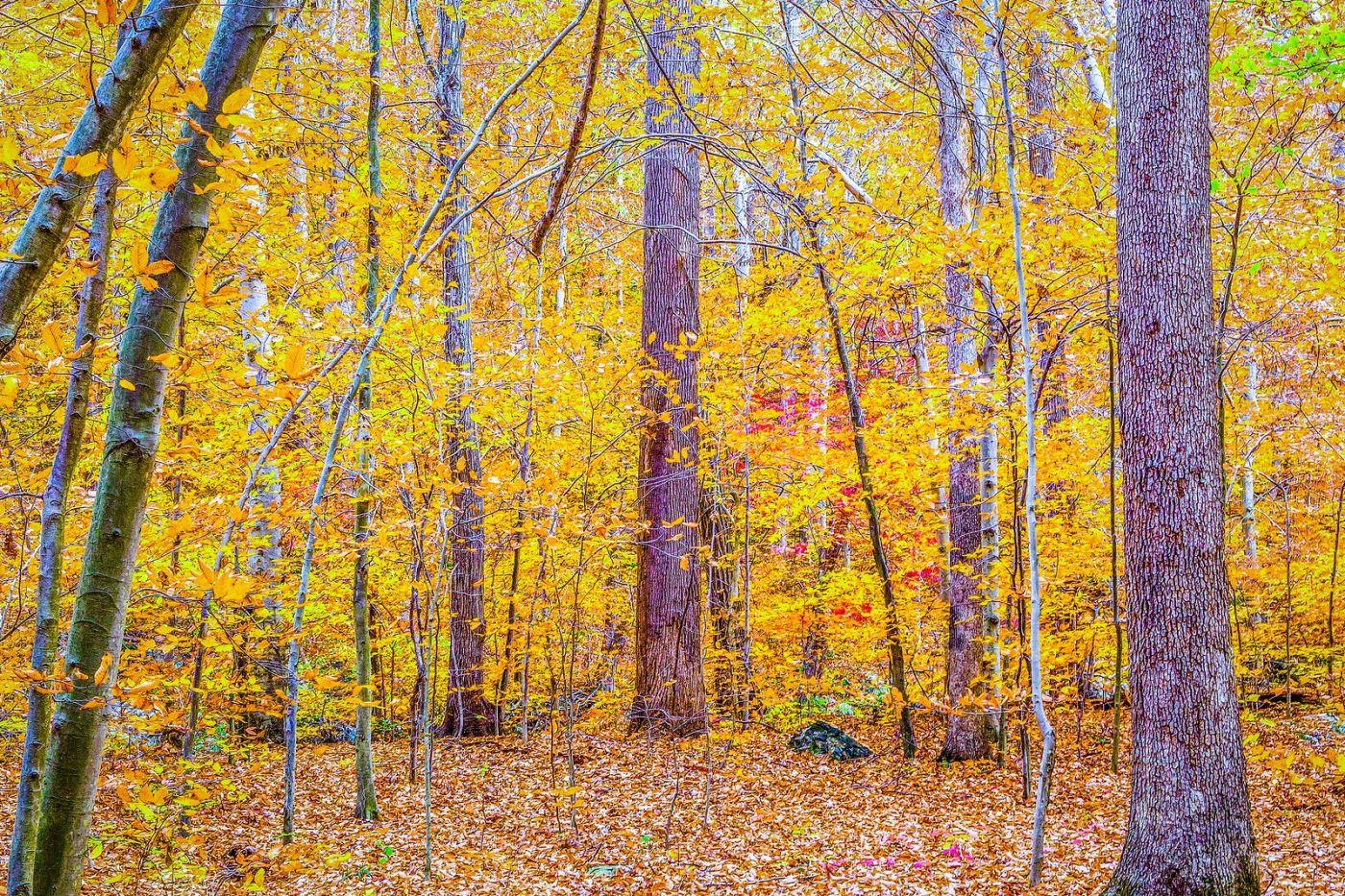 宾州雷德利克里克公园(Ridley creek park),如梦的画面_图1-15