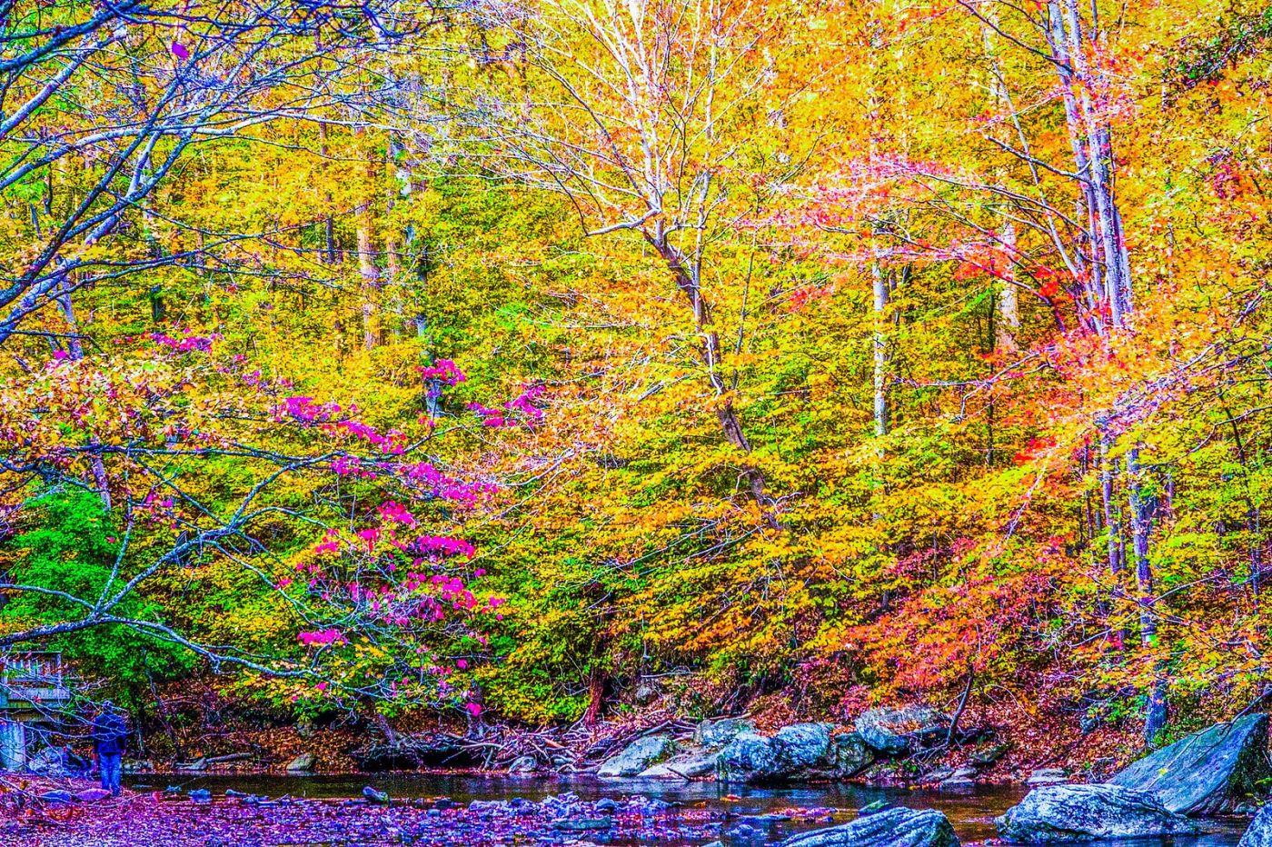 宾州雷德利克里克公园(Ridley creek park),如梦的画面_图1-24