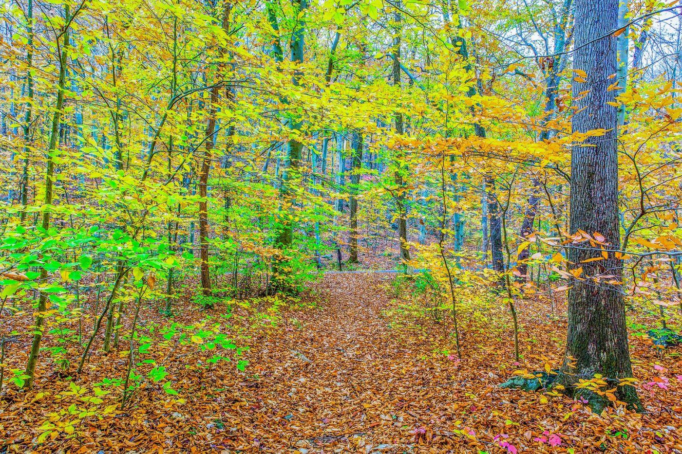 宾州雷德利克里克公园(Ridley creek park),如梦的画面_图1-28