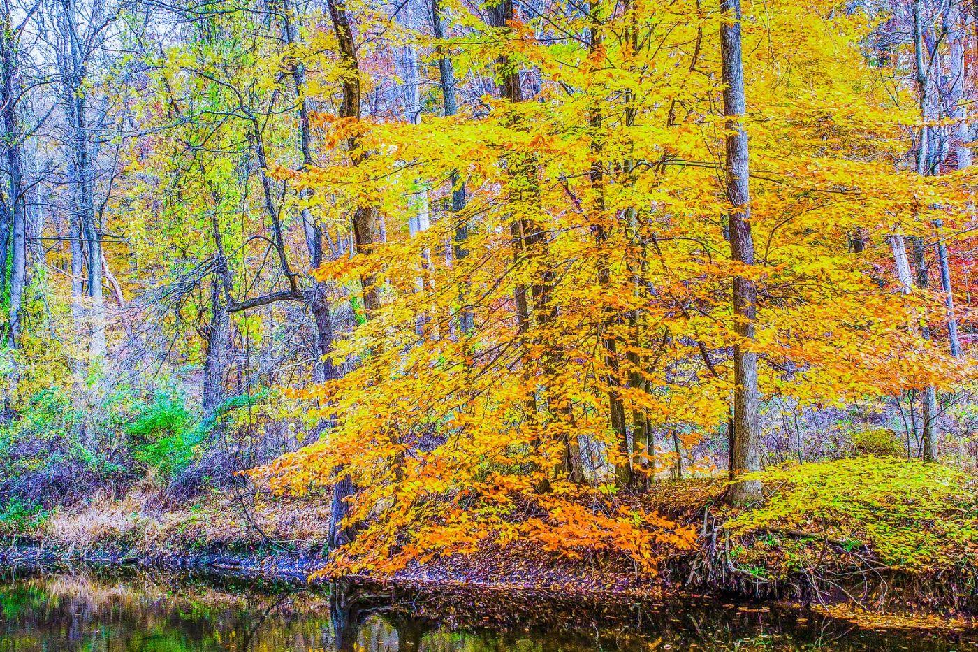 宾州雷德利克里克公园(Ridley creek park),如梦的画面_图1-36