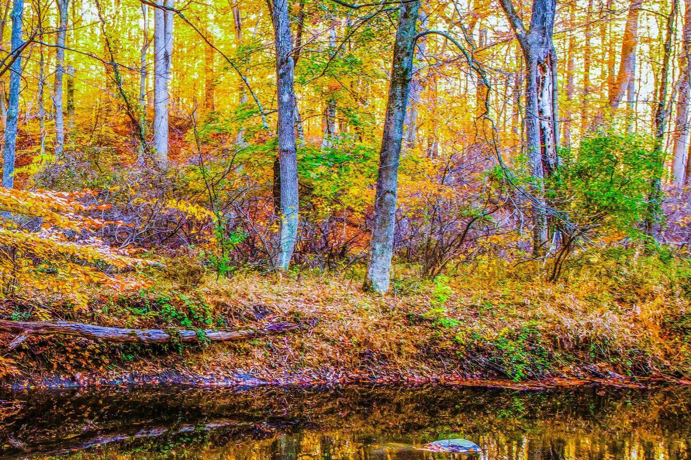 宾州雷德利克里克公园(Ridley creek park),如梦的画面_图1-35