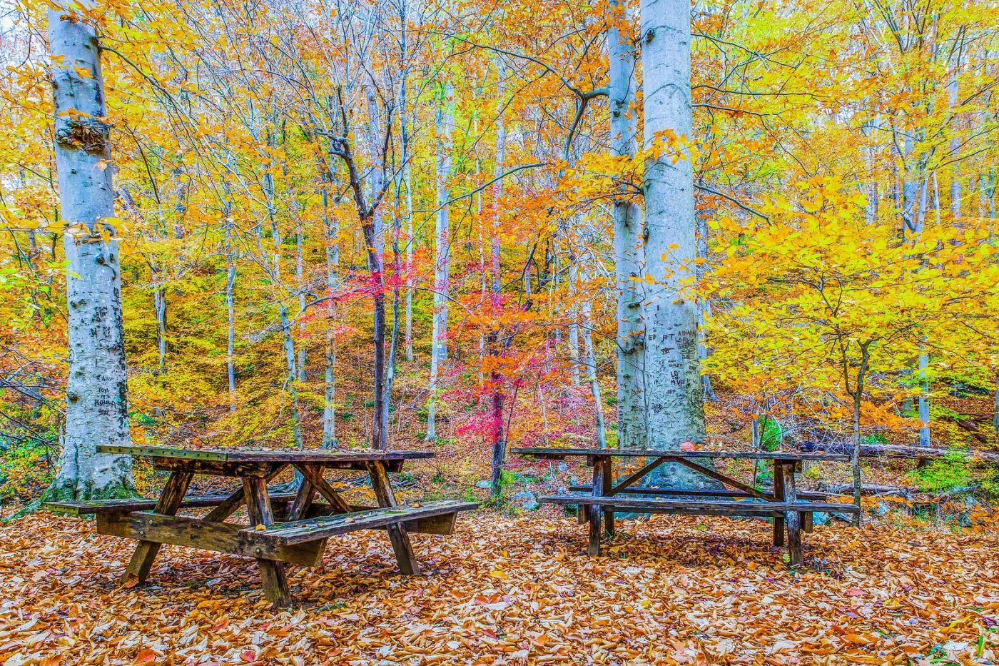 宾州雷德利克里克公园(Ridley creek park),如梦的画面_图1-33