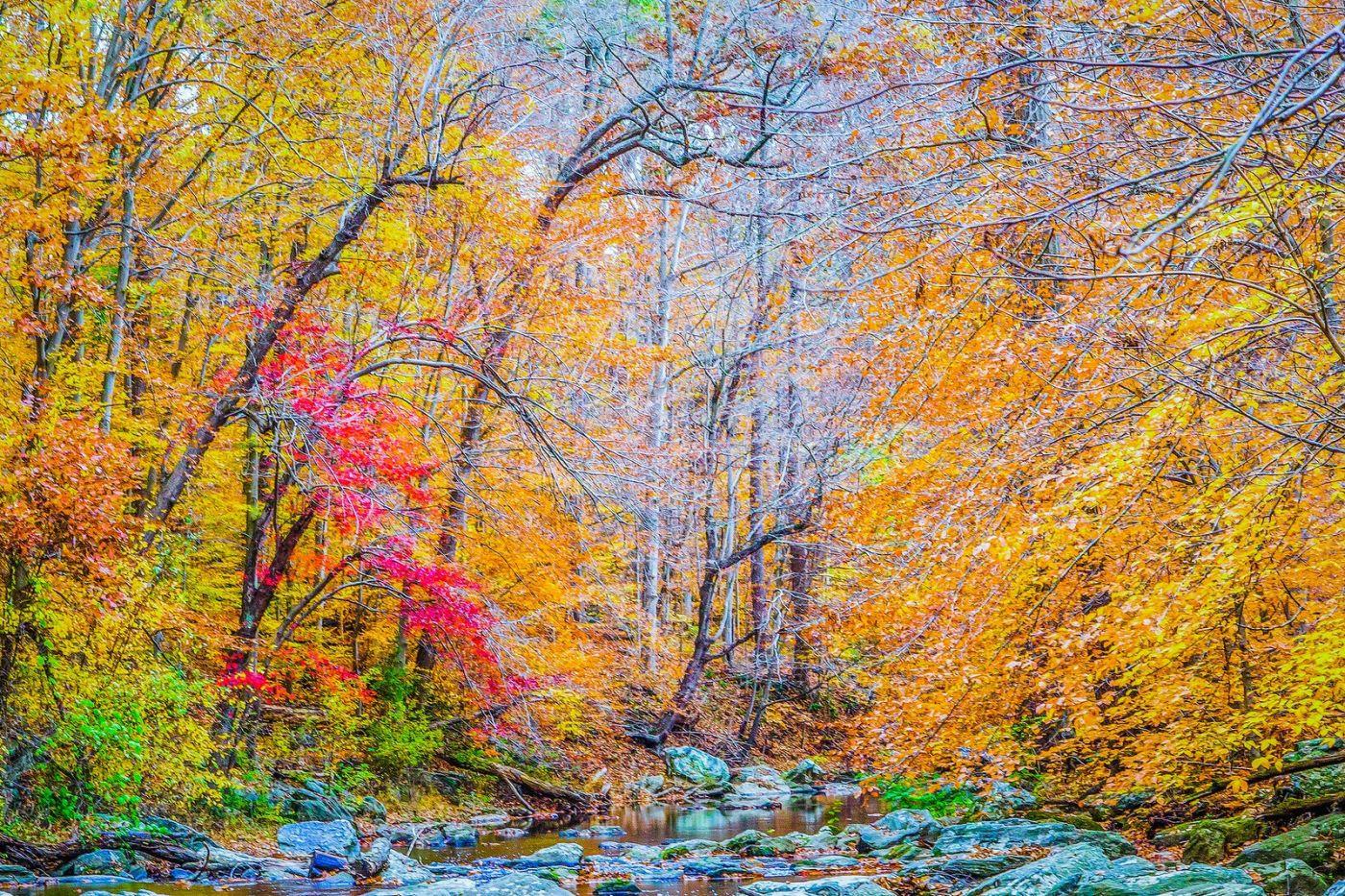 宾州雷德利克里克公园(Ridley creek park),如梦的画面_图1-39