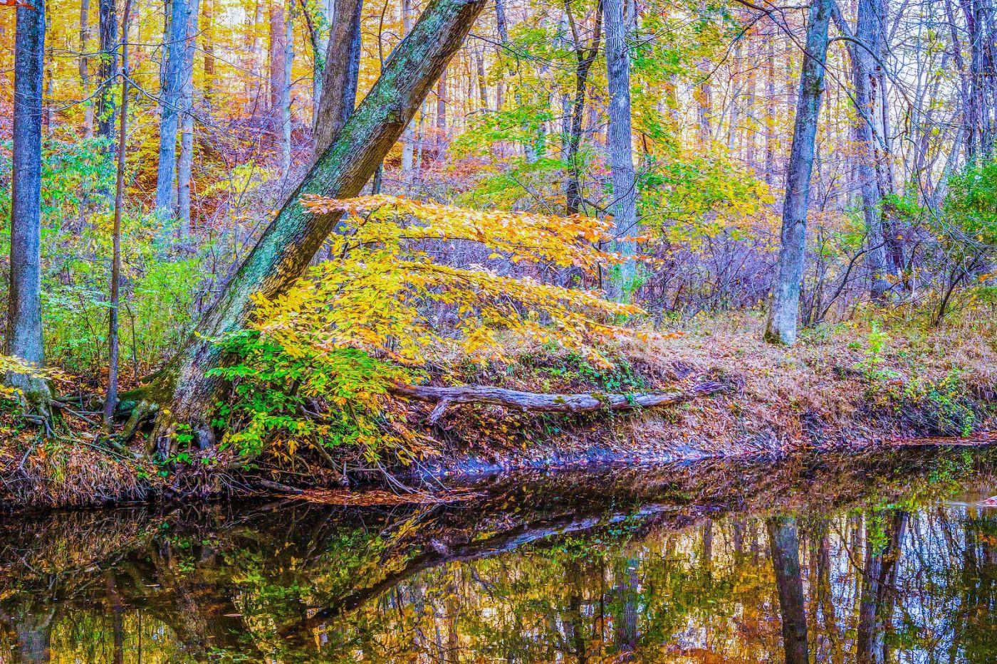 宾州雷德利克里克公园(Ridley creek park),如梦的画面_图1-40