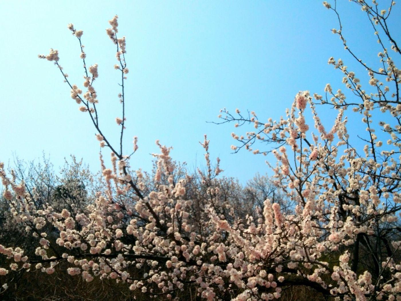 言日:西山清明祭_图1-3