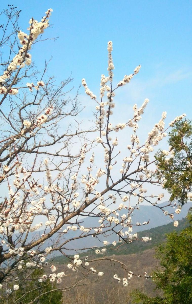 言日:西山清明祭_图1-4