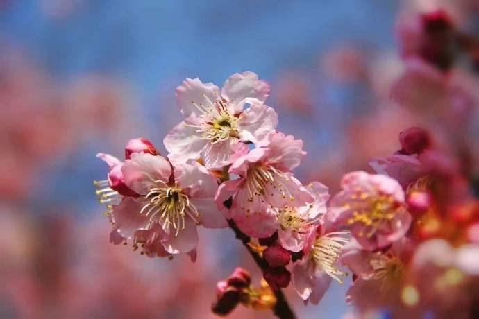 桃花杏花盛开春满园,正是情人约会快乐时,甜蜜约会技巧_图1-4