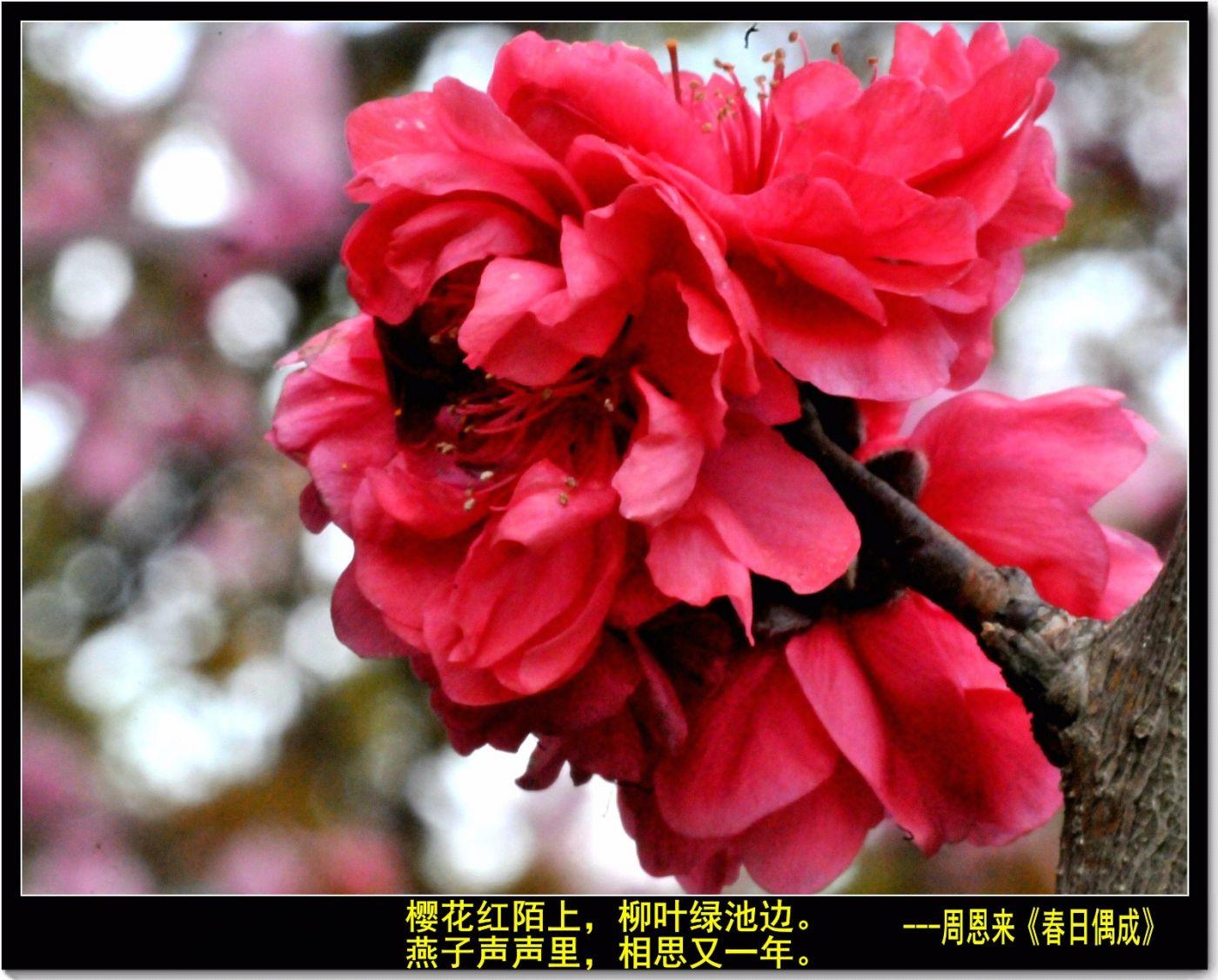 三月三日上巳节(七律)_图1-1