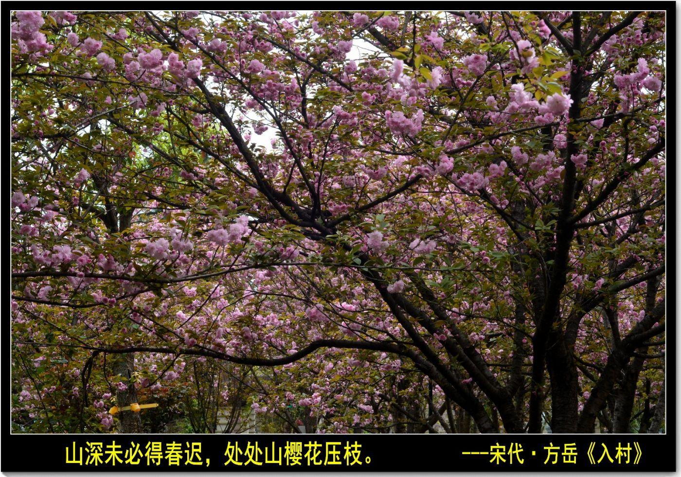 三月三日上巳节(七律)_图1-7