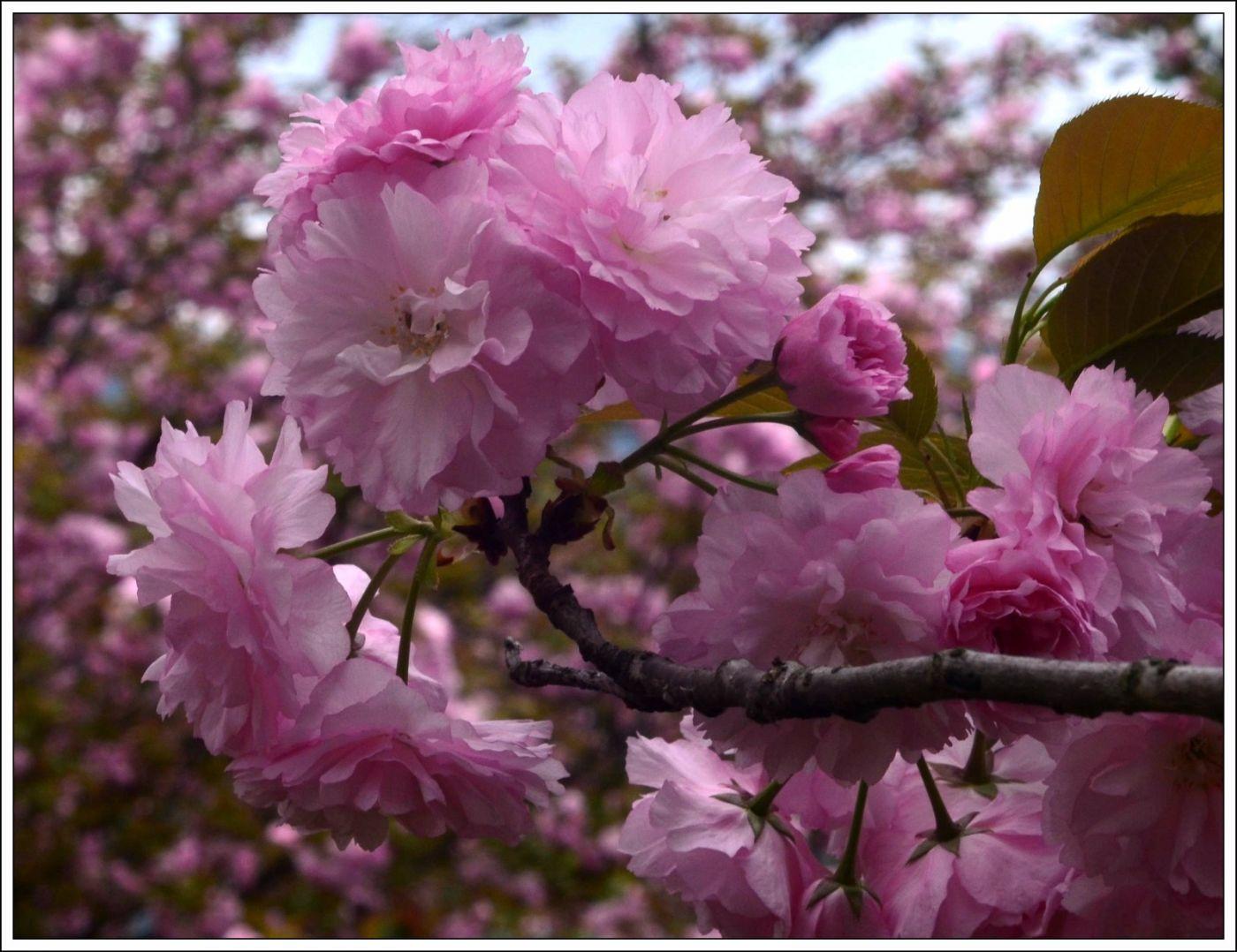 三月三日上巳节(七律)_图1-4
