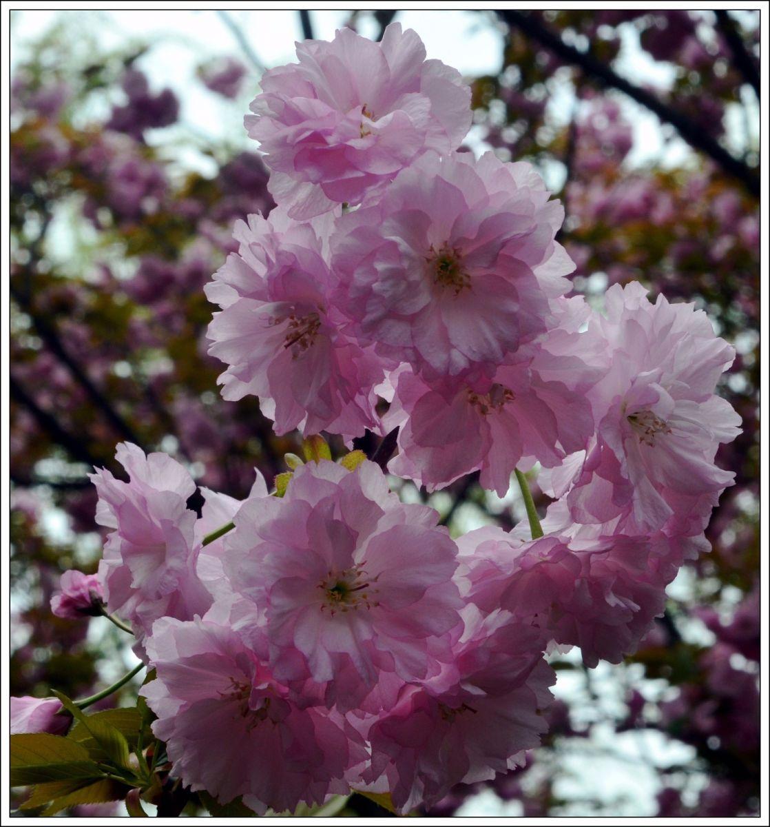 三月三日上巳节(七律)_图1-3