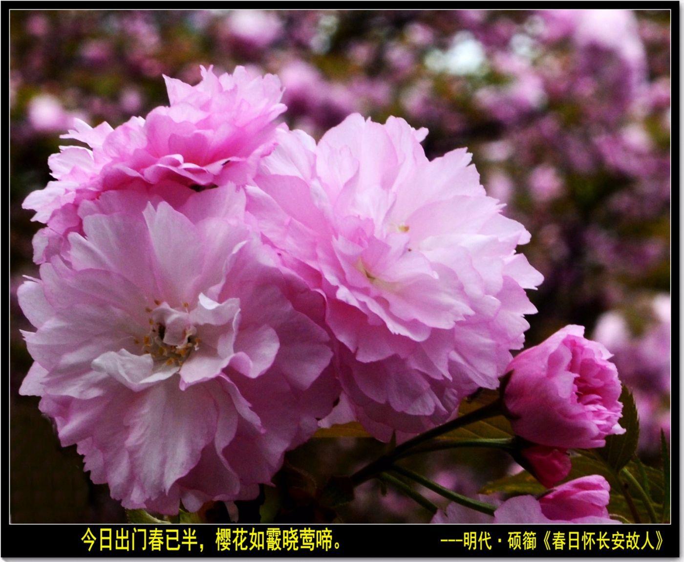 三月三日上巳节(七律)_图1-5