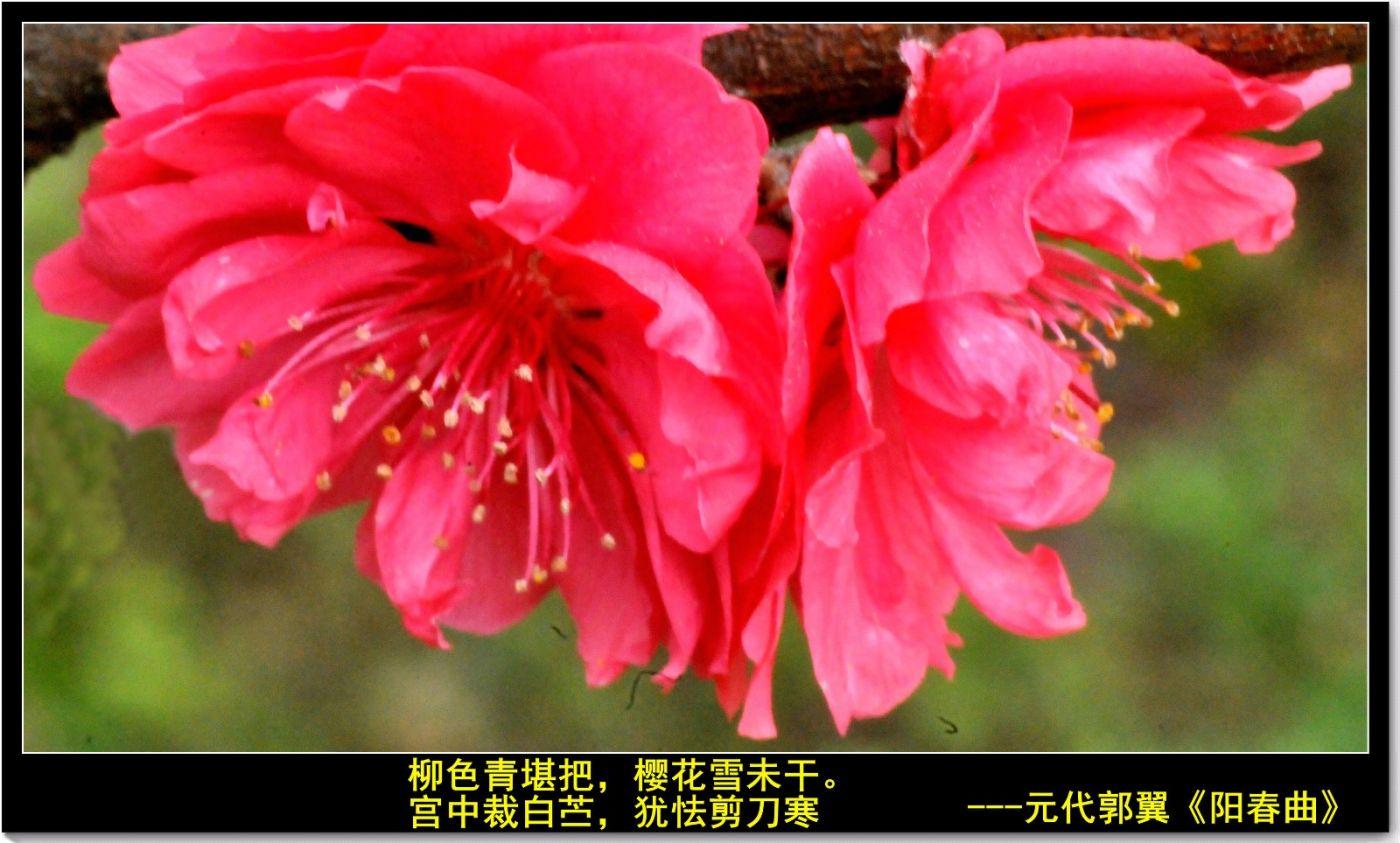 三月三日上巳节(七律)_图1-8