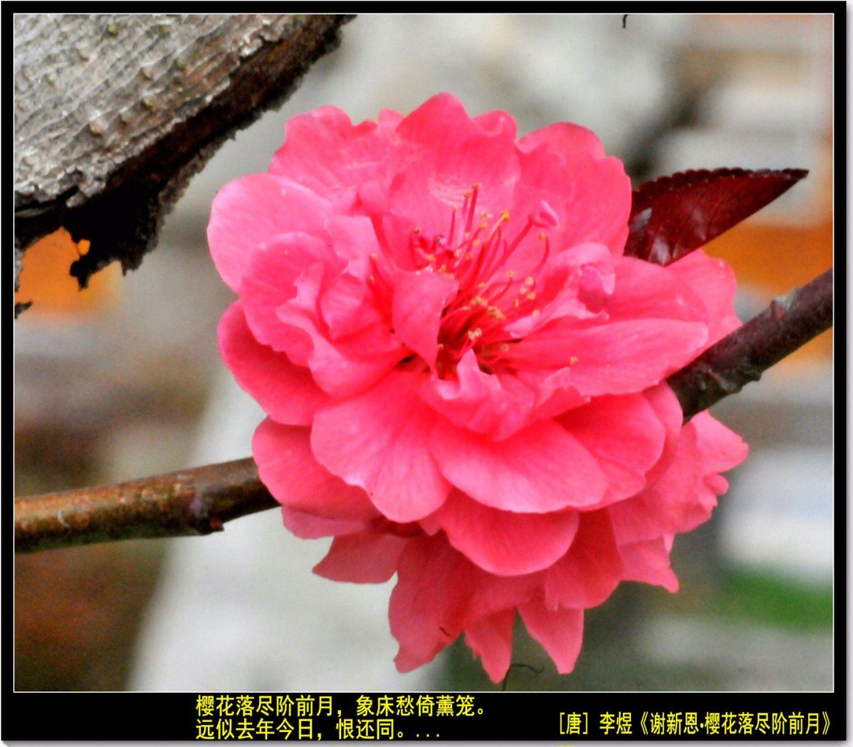 三月三日上巳节(七律)_图1-9