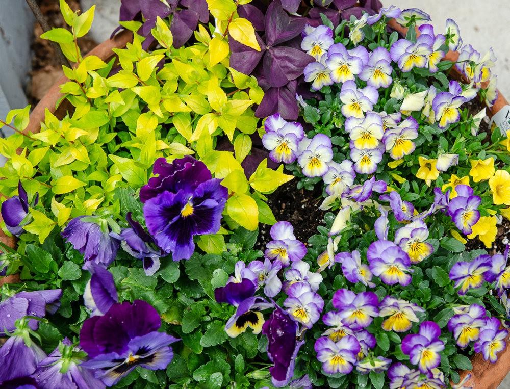 清明节前的花卉_图1-2