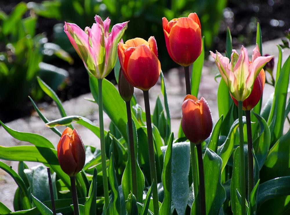 清明节前的花卉_图1-7