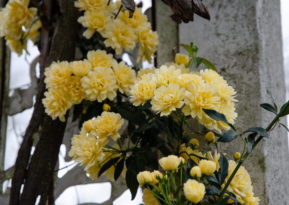 清明节前的花卉_图1-20