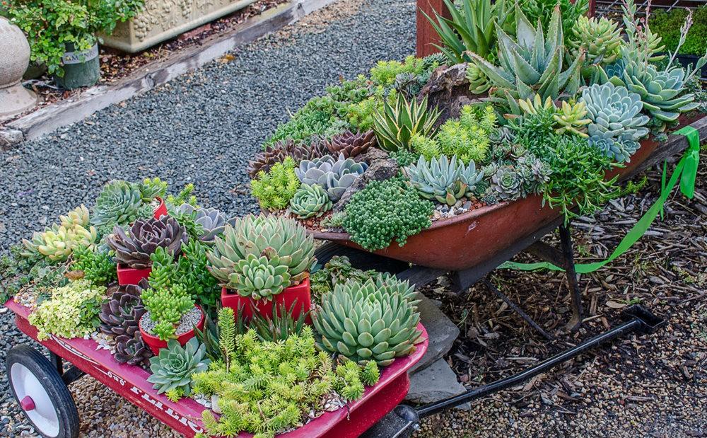 参观Sonoma Mission Gardens 苗圃_图1-3