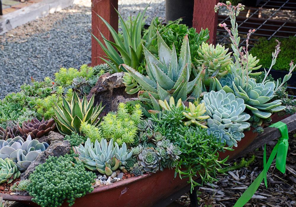 参观Sonoma Mission Gardens 苗圃_图1-4