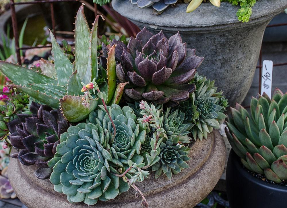 参观Sonoma Mission Gardens 苗圃_图1-5