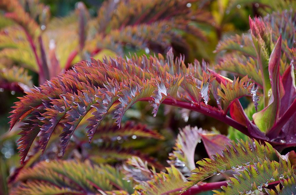门多西诺海岸植物园的夏天_图1-11