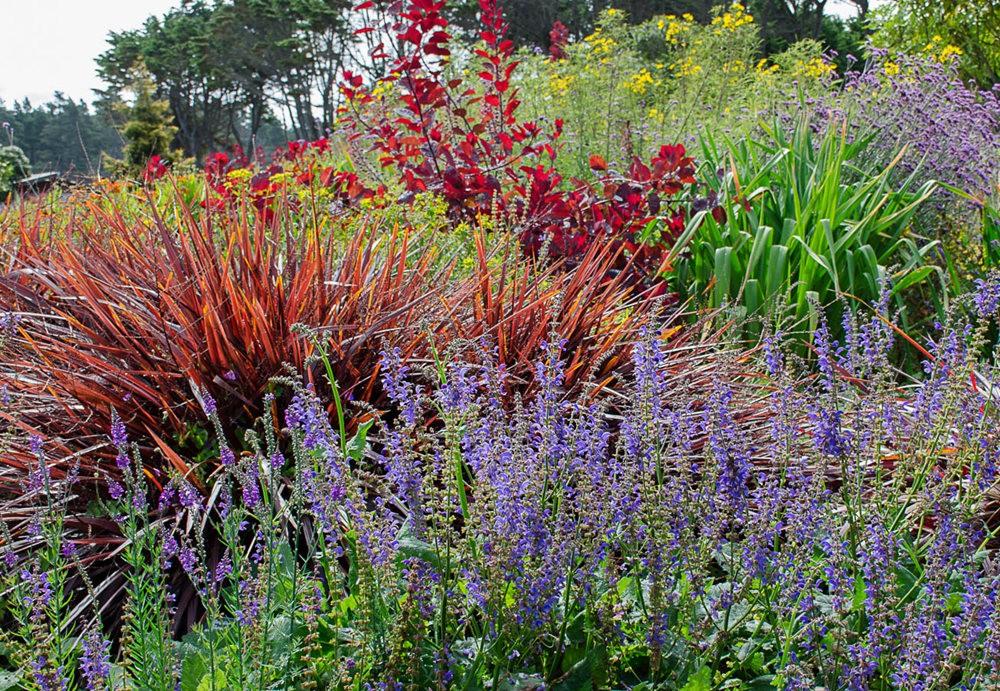 门多西诺海岸植物园的夏天_图1-13