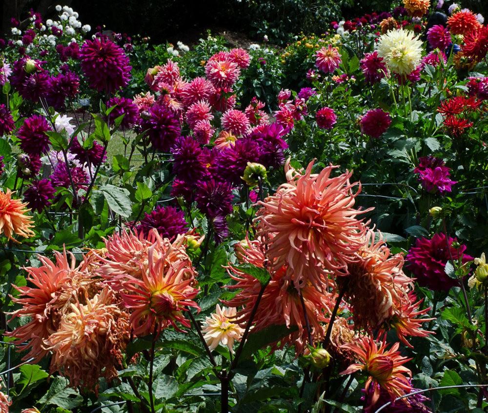 门多西诺海岸植物园的夏天_图1-14