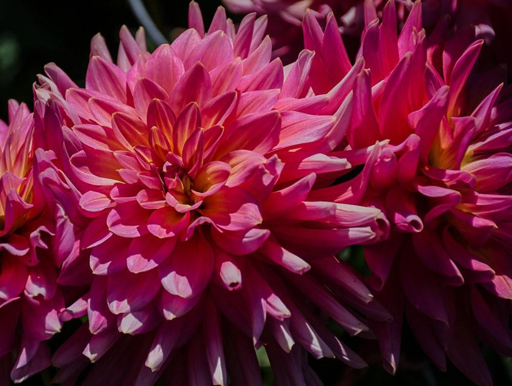 门多西诺海岸植物园的夏天_图1-16