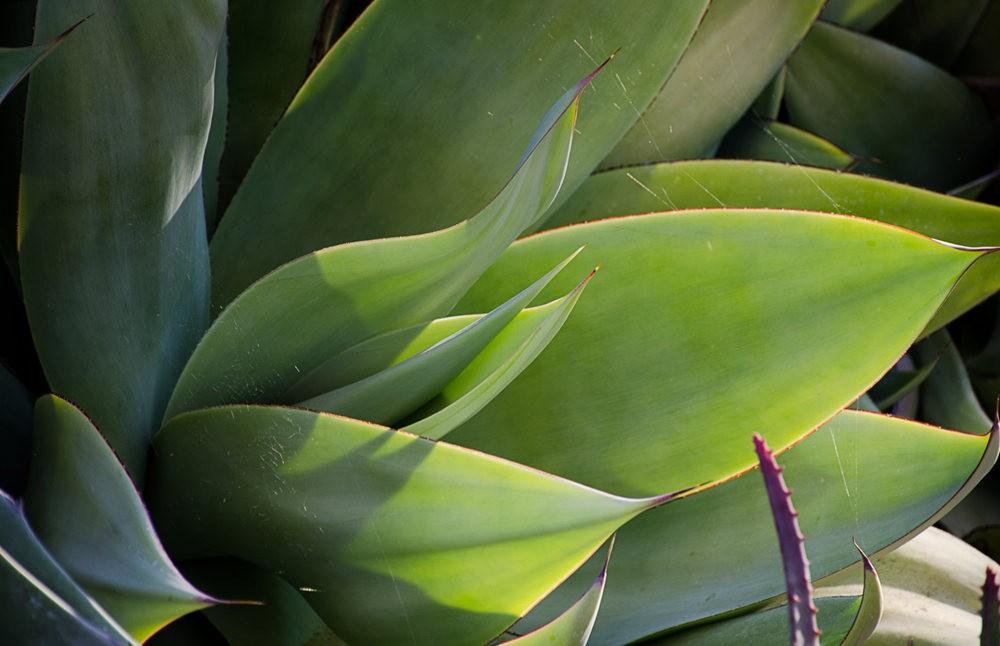 加州最爱的花园之一---露丝.班克罗夫花园_图1-1