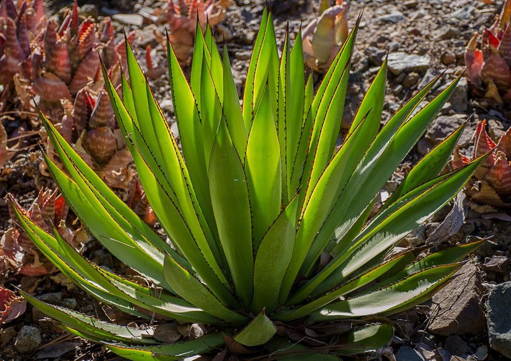 加州最爱的花园之一---露丝.班克罗夫花园_图1-3
