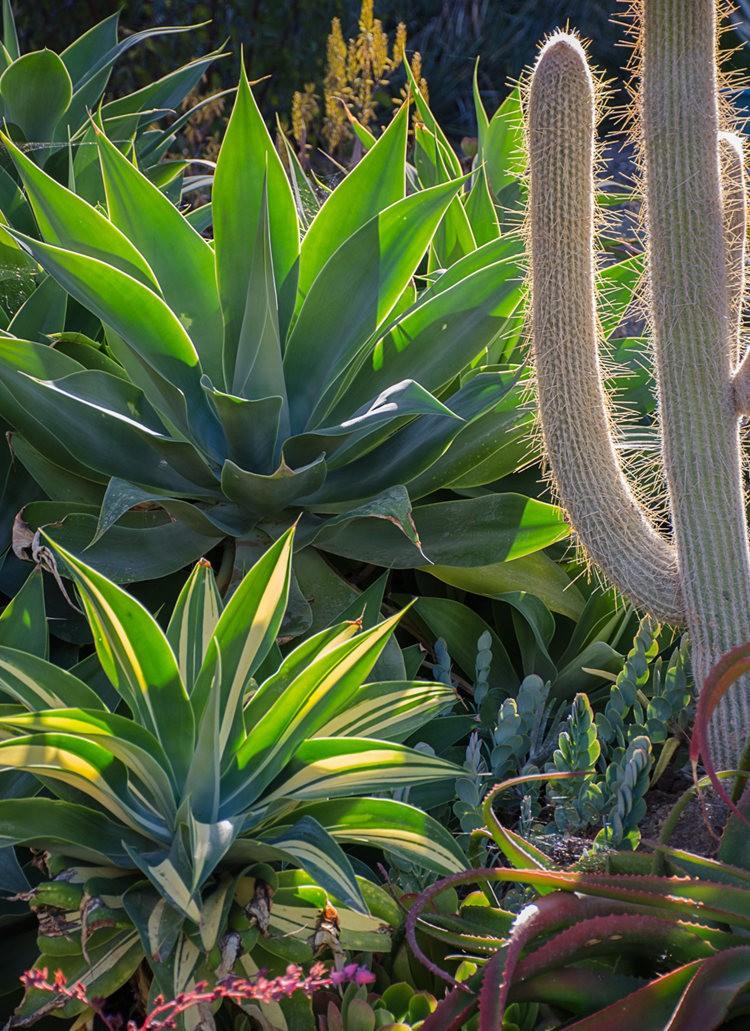 加州最爱的花园之一---露丝.班克罗夫花园_图1-4